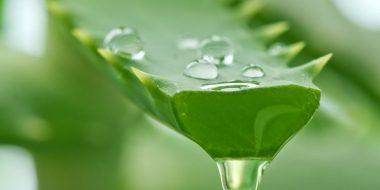 benefici ed utilizzi dell'aloe vera